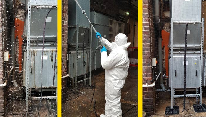 Specialist pest cleaning services, pest clean up services